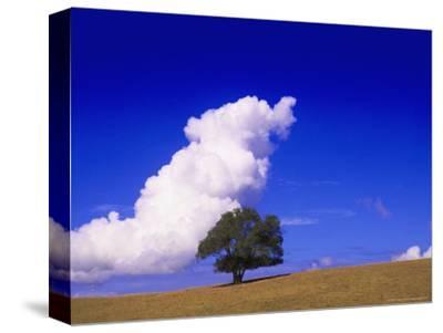 Tree and Cloud, Atlantic Wood