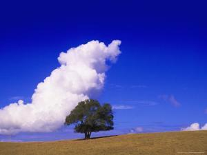 Tree and Cloud, Atlantic Wood by Silvestre Machado