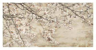 Ciliegio in fiore