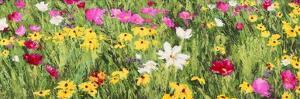 Field of Flowers (detail) by Silvia Mei