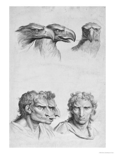Similarities Between the Head of an Eagle and a Man-Charles Le Brun-Giclee Print