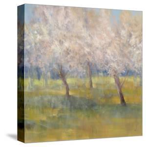 Cherry Blossoms by Simon Addyman