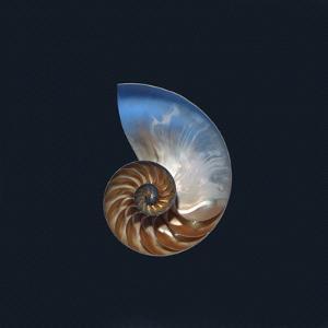 Nautilus Shell by Simon Carter