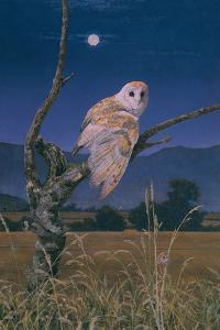 Barn Owl by Simon Cook