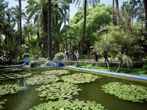 Jardin Majorelle, Marrakech (Marrakesh), Morocco, North Africa, Africa by Simon Harris