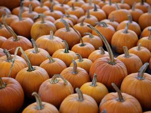 Large Number of Pumpkins for Sale on a Farm in St. Joseph, Missouri, USA, North America by Simon Montgomery