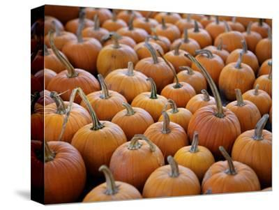 Large Number of Pumpkins for Sale on a Farm in St. Joseph, Missouri, USA, North America