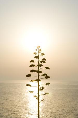 Tree, Sunset (Backlit)