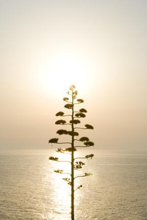 Tree, Sunset (Backlit) by Simon Plant