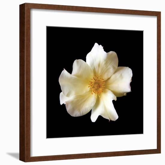 Simple Rose-Katano Nicole-Framed Photo