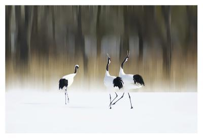 Sing A Song Of Love-Ikuo Iga-Giclee Print