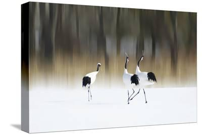 Sing A Song Of Love-Ikuo Iga-Stretched Canvas Print