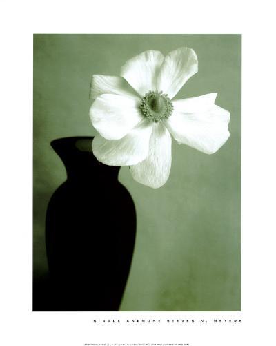 Single Anemone-Steven N^ Meyers-Art Print