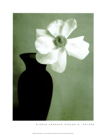 https://imgc.artprintimages.com/img/print/single-anemone_u-l-e97nj0.jpg?p=0