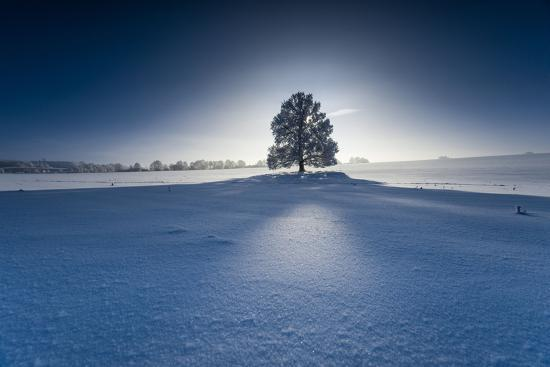Single Broad-Leaved Tree in Winter Scenery in the Back Light, Triebtal, Vogtland, Saxony, Germany-Falk Hermann-Photographic Print