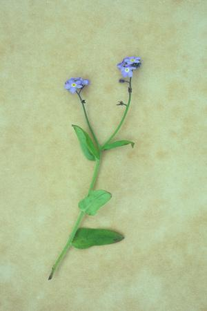 Single Flower-Den Reader-Photographic Print