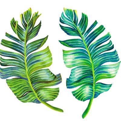 Single Isolated Banana Leaf-rosapompelmo-Art Print