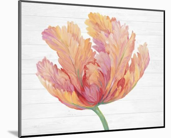 Single Pink Bloom II-Tim O'Toole-Mounted Art Print