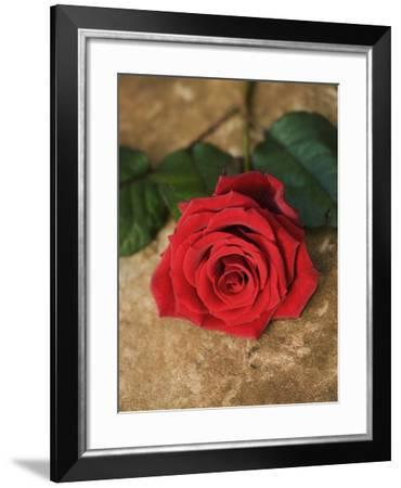Single Red Rose on Stone Floor-Clive Nichols-Framed Photographic Print