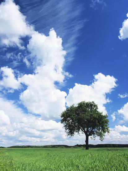 Single Tree in a Field, Swabian Alb, Baden Wurttemberg, Germany, Europe-Markus Lange-Photographic Print