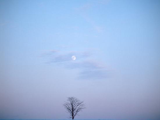 Single Tree in Winter Landscape Evening Moon--Photographic Print
