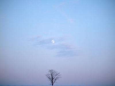 https://imgc.artprintimages.com/img/print/single-tree-in-winter-landscape-evening-moon_u-l-q1bqiae0.jpg?p=0