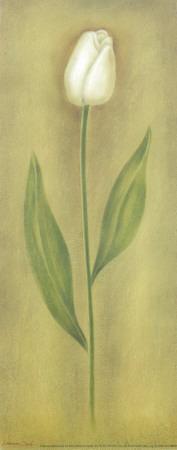 https://imgc.artprintimages.com/img/print/single-tulip-ii_u-l-f4y3h50.jpg?p=0