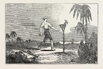 Singular Dexterity of a Goat--Giclee Print