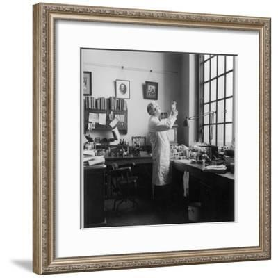 Sir Alexander Fleming - Scottish Bacteriologist at Work in His Laboratory--Framed Photographic Print
