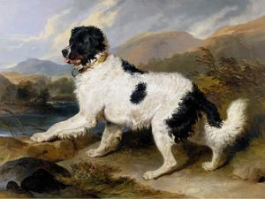Lion: A Newfoundland Dog, 1824 by Sir Edwin Henry Landseer