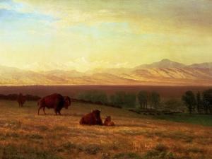 Buffalo on the Plains, Circa 1890 by Sir William Beechey