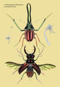Beetles: Chiasognathus Chiloensis and Lucanus Cervus by Sir William Jardine