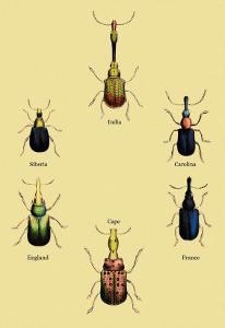 Beetles from Around the World by Sir William Jardine