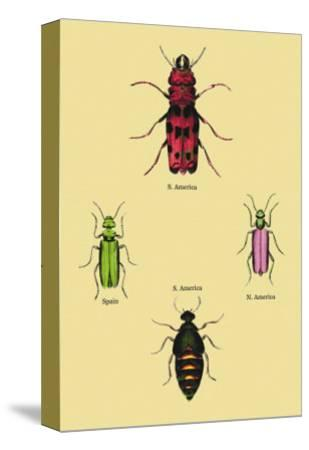 Beetles from North and South America and Spain