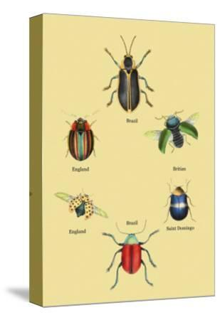 Beetles of Brazil, Britain, England and Saint Domingo