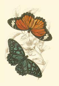 Butterflies II by Sir William Jardine