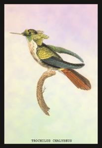 Hummingbird: Trochilus Chalybeus by Sir William Jardine