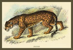 Jaguar by Sir William Jardine
