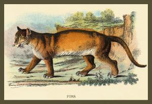 Puma by Sir William Jardine