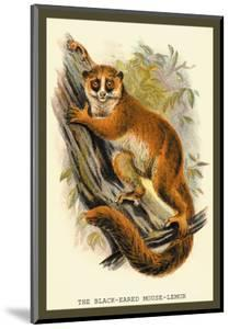 The Black-Eared Mouse Lemur by Sir William Jardine