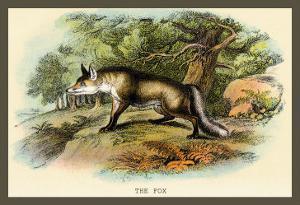 The Fox by Sir William Jardine