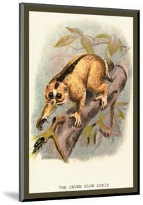 The Javan Slow Loris by Sir William Jardine