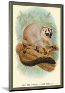 The Red-Footed Night-Monkey by Sir William Jardine