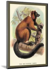 The Red-Ruffed Lemur by Sir William Jardine