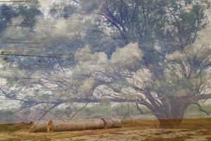 Texas Tree Collage by Sisa Jasper
