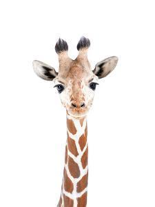 Baby Giraffe by Sisi and Seb