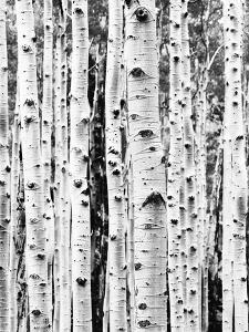 Birch by Sisi and Seb