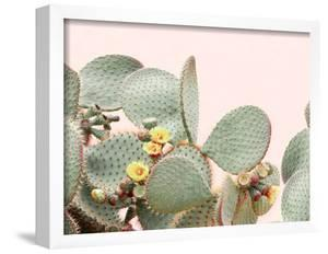 Blooming Cactus by Sisi and Seb