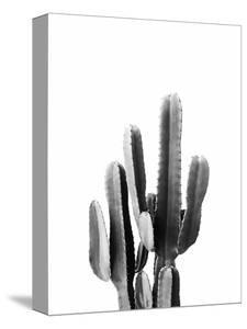 Cacti Black and White by Sisi and Seb
