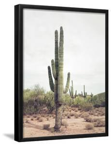 Desert Cactus by Sisi and Seb